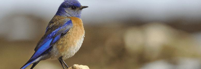 Squaredot B2B Marketing | How to use Twitter for B2B marketing